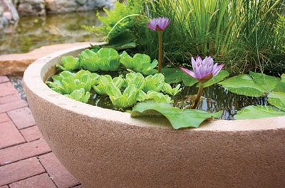 Patio Pond Example